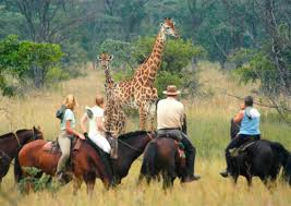 Horizon Horseback Safaris